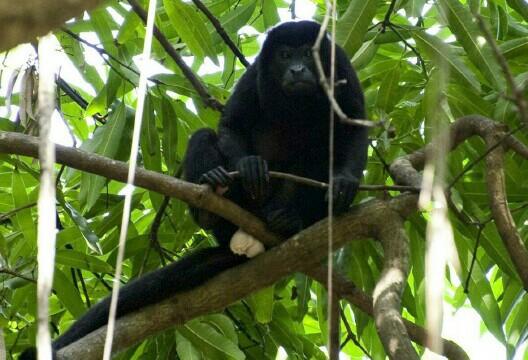 monkeylooking