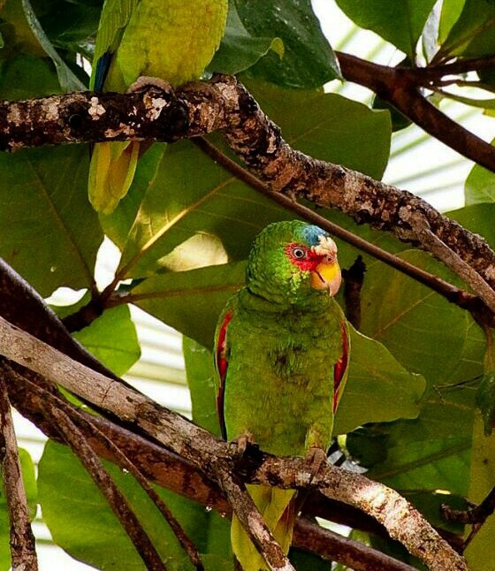 one green parrots
