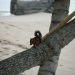 squirrelbeach