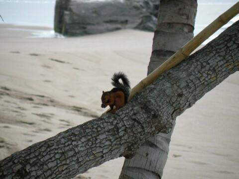 squirrelbeach
