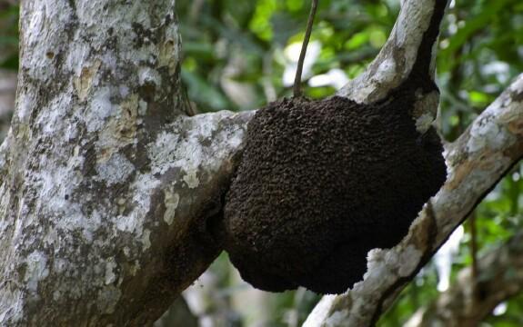 termitenest