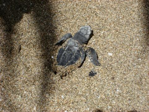 turtlehatching2